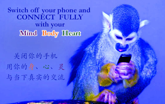monkey+phone